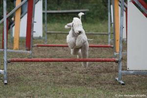 Tsarine, 5 mois 1/2 aux sauts.
