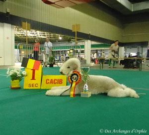CAC-CACIB-BOB et Golden Winner 2013 !!!