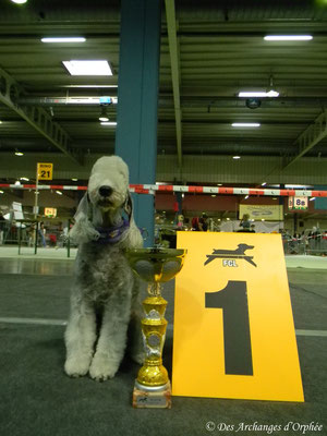 Olga : 1ère Excellent en classe Champion, CACL, R.CACIB.