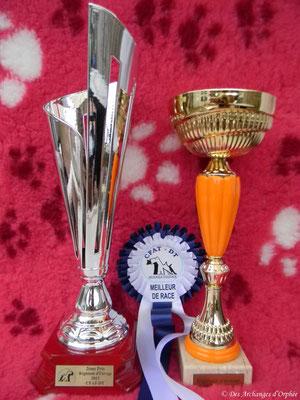 Les récompenses de Olga et Tsarine.