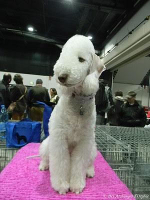 Tsarine au 25ème Dog show d'Offenburg.