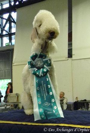 Tsarine est Championne de Sarre.