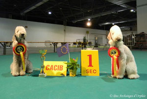 Olga & Tsarine Golden Dog Trophy winners.