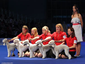 Best of Breed 3 au World Dog Show de Paris pour l'élevage Isotop's ! Nous sommes très fiers de la famille de notre Olga.