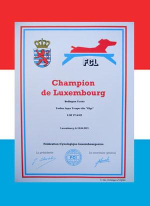 Olga est championne du Luxembourg lors de la 83ème CACIB du Luxembourg..