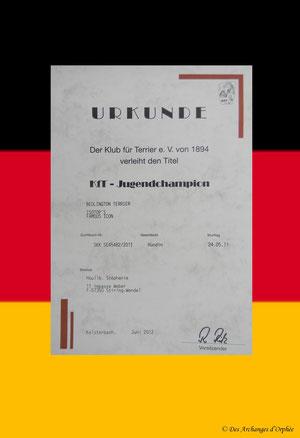 Diplôme du KfT /club allemand des terriers.