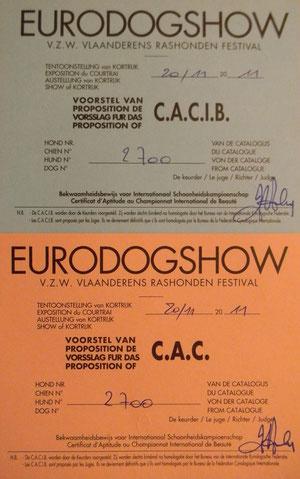 CACIB + CAC pour Olga à Courtrai.