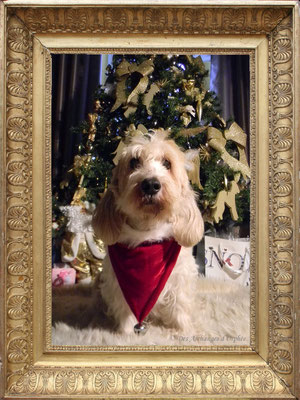 Elliot 14 ans Noël 2012