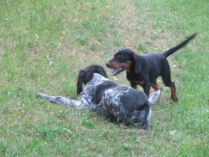 Quax und Oschi im Spiel mit etwa 16 Wochen