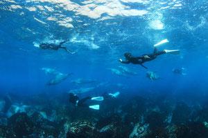 利島のイルカの群れとドルフィンスイマー