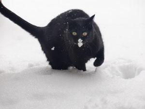 Katzenbetreuung München / Katzensitter München - Die Alternative zur Katzenpension