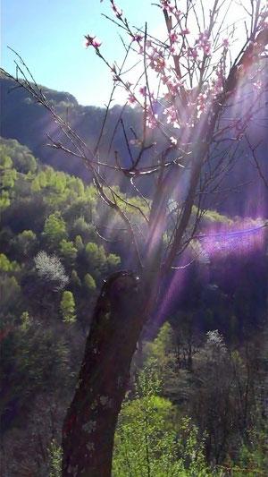 """""""...unter den Jahreszeiten bin ich der blütenreiche Frühling."""" (Bhagavad gita 10.35)"""