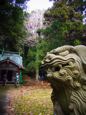 金峰山近くの神社でちょっとお参り&新年の決意・・・ぱちぱち♪ 今年もいい1年になるようがんばります!