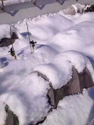 ファームに積もった雪です