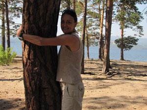 Pinie am lake Burabay, Kasachstan