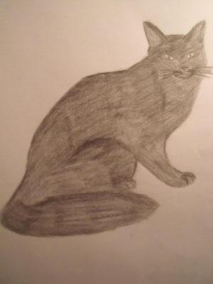 il gatto nero portafortuna