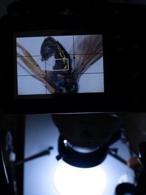 ステップダウンリング同士を接続すれば、軽めのカメラであれば三脚なしでも比較的安定する。バックモニタがあるカメラなら、そのまま観察画面として使用することも可能。