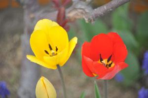 福島大学は花が多いです