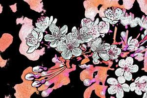 Fotobearbeitungen Sakura copyright Cornelia Kalkhoff