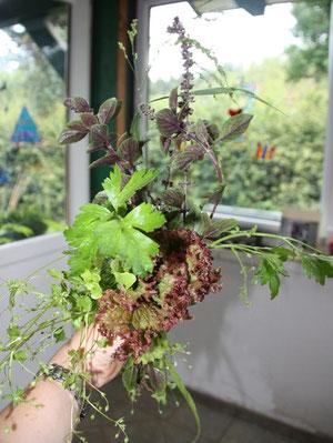 Kräuterstrauß - bestehend aus Basilikum, Peteriel, Vogelmiere, Braunhirse, Salat und Vogelmiere - alles aus dem eigenen Garten. Die Wellensittiche haben ihn genossen....