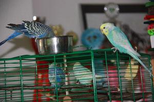 Hurakan und Mio begrüßen Otto und Pearl im Ankunftskäfig