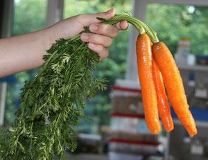 Frische Karotten mit Kraut vom Bauernmarkt