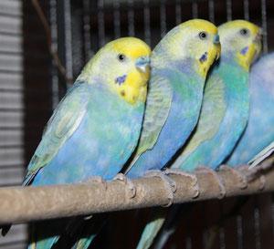 Otto, Jack und Angel - dahinter Jolly (Otto's hoffentlich zukünftige...)