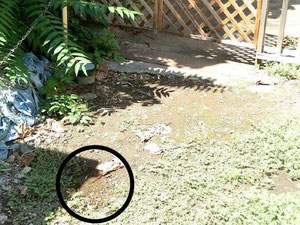 漏水が確認された、ある民家の前の路地