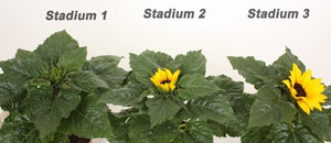 Stadium 1-2-3 bovenaanzicht