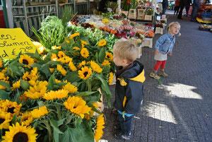aha,das sind ja viele Sonnenblumen!was sucht Ida denn?