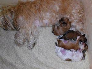 Unsere 4 Süßen nehmen stetig zu! Clairchen blüht in ihrer Mutterrolle richtig auf. Die Kleinen scheinen mit ihrer Mami sehr zufrieden zu sein.