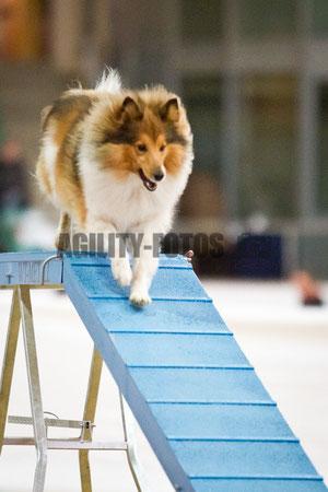 www.agility-fotos.de