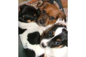 Sunny und ihre Geschwisterchen