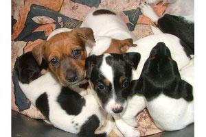 Sunny und ihre Geschwister