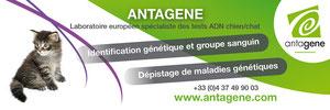 Antagène