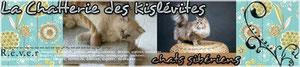 Chatterie des Kislévites