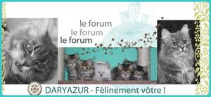 Forum Daryazur