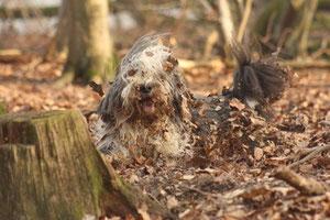 Filou nach seinem Blätterbad!*g*