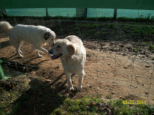Caprice et Dolly