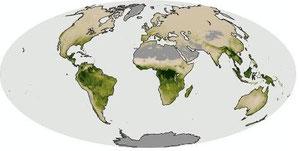 図5 2007年 アマゾンの火災と熱帯の降雨 by Nasa  Net Primary Productivity Total Rainfall 2007年
