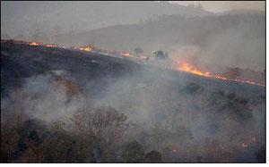 アマゾン・ロンドニア州での牧場開発のための野焼き1989年