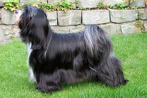 BOB Steinhausen 2013 TT Caesar's Ce-Luuh-Naah made of Dog's Wisdom