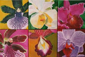 Sechs Orchideen, Foto: b.ertl