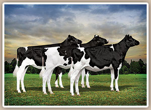 Gloryland Goldwyn Glitter, Glamour and Golden