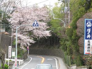 寺坂の石垣と桜