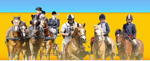 www.pferdesport-bw.de