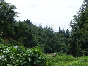的場山の西の谷