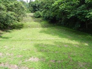 的場山の北側の休耕田