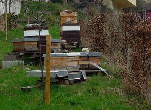 Bienenstand im November