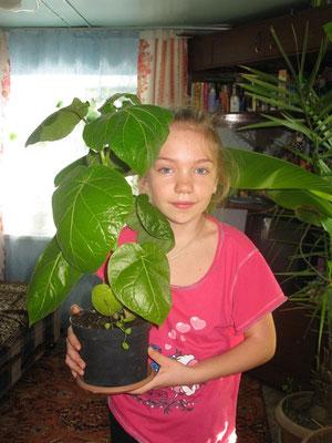 Растению 3 месяца от всходов из семян, плодоношение в комнатных условиях на третий год.